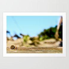 Journey of the Hermit Crab Art Print