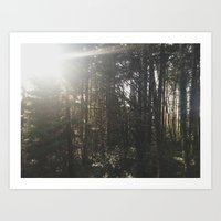 Of light & trees Art Print