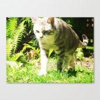 CuriousKat Canvas Print