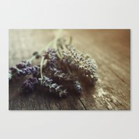 Lavender Morning Canvas Print