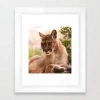 The Cougar Framed Art Print