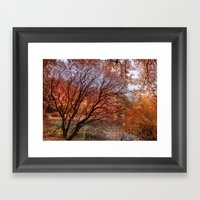 Mad Colors Of Autumn Framed Art Print