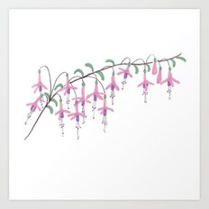 Fuchsia Flower Art Print