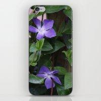 Perriwinkle iPhone & iPod Skin