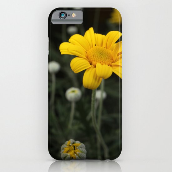 Spring - Chrysanthemum iPhone & iPod Case
