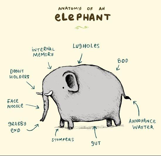 Anatomy of an Elephant Art Print