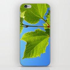 green wine leaf iPhone & iPod Skin