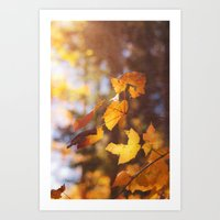 sun soaked autumn Art Print