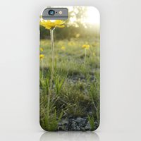 iPhone & iPod Case featuring Lakeside Daisy by Jasmine Cupp