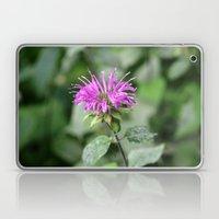 Monarda - Bee Balm Laptop & iPad Skin