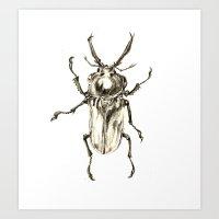 Beetle2 Art Print