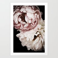 Sweet Dreams Peonies 2 Art Print