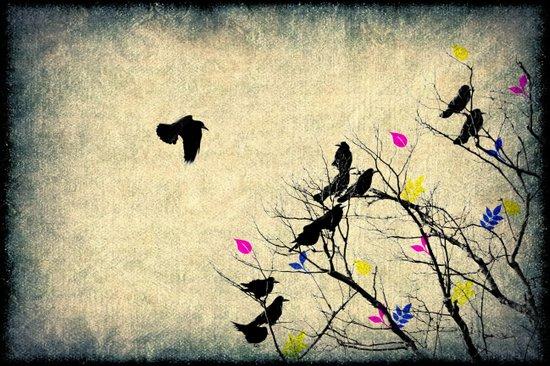 The crows Art Print