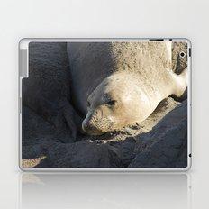 Elephant Seal: Contentment Laptop & iPad Skin