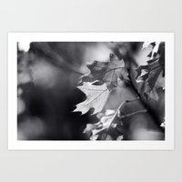 Winter Oak In Black And … Art Print