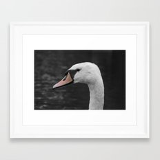 Swan Portrait 4 Framed Art Print