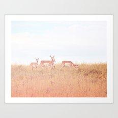 Antelope in Grass Art Print