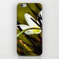 Shyness iPhone & iPod Skin