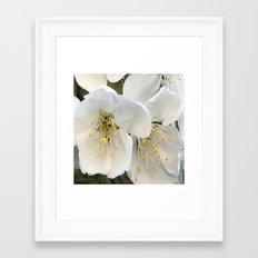white flower Framed Art Print