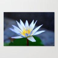 Lotus Portrait Canvas Print