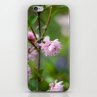 Flowering Almond Blossom… iPhone & iPod Skin