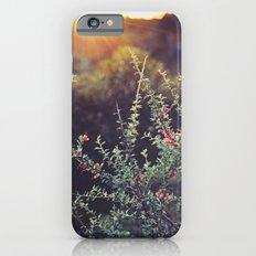 Sunlit iPhone 6 Slim Case