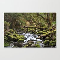 Paradise Creek III Canvas Print