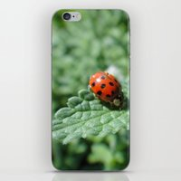 Ladybug on a Leaf iPhone & iPod Skin