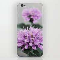 Porcupine Purple iPhone & iPod Skin