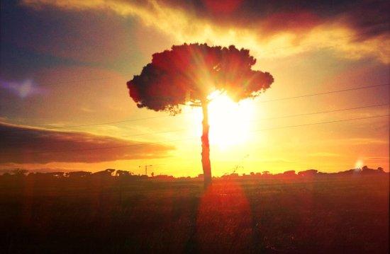 lonely tree. Art Print