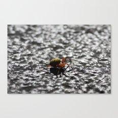Marbled Orb Weaver Canvas Print