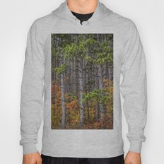 Small Saplings among a Grove of Pine Trees Hoody
