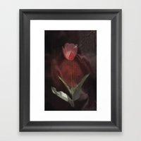 silk tulip Framed Art Print