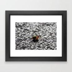 Marbled Orb Weaver Framed Art Print