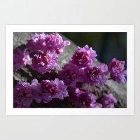 tree flowers Art Print