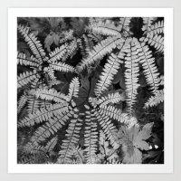 Maidenhair Fern Art Print