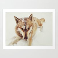 Siberian Husky In The Sn… Art Print