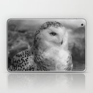 Snowy Owl - B & W Laptop & iPad Skin