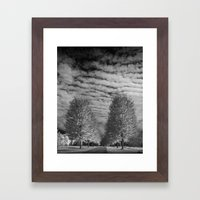 Rows of Autumn Trees with Cirus Cloudy Sky in Black & White in Michigan Framed Art Print