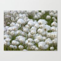 Cotton Grass Canvas Print