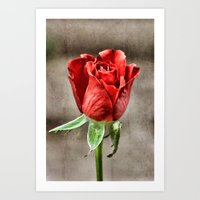 Red Rose Red Art Print