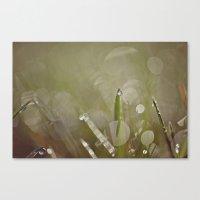 Dew Drop Canvas Print