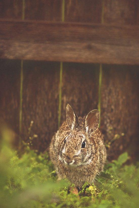 Easter bunny Art Print