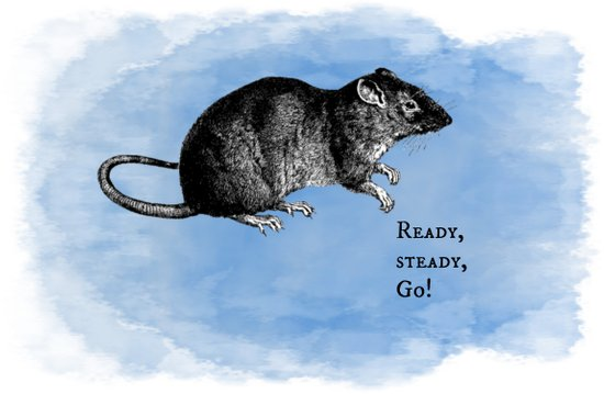 WordPlay 3 : Rat Race Art Print