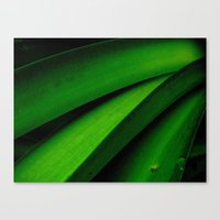 Greener Than Green Canvas Print