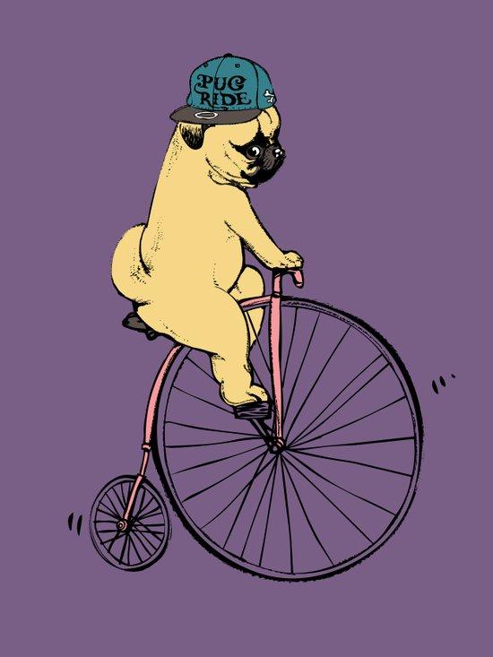 Pug Ride Canvas Print