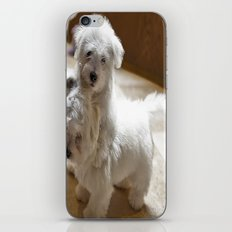 What? Do I have to stop! iPhone & iPod Skin