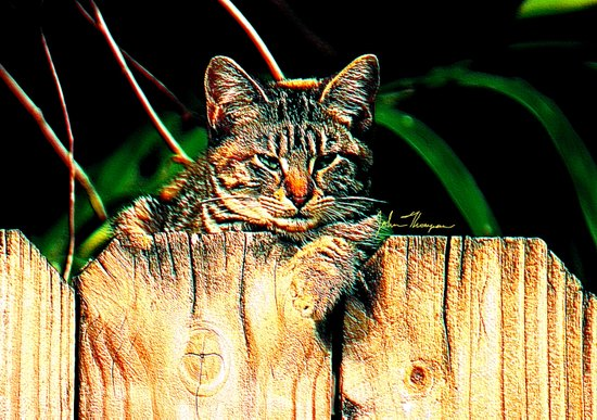 Kitten on a Fence Art Print