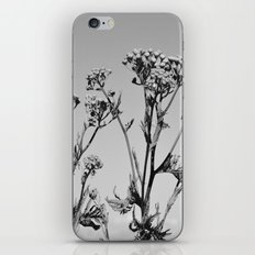 Weeds iPhone & iPod Skin