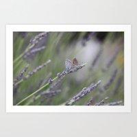 Lavender Butterflies - J… Art Print